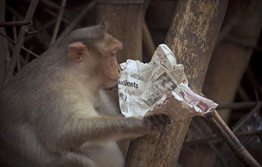 """/印度猕猴看报纸""""研读""""股市行情表情震惊"""